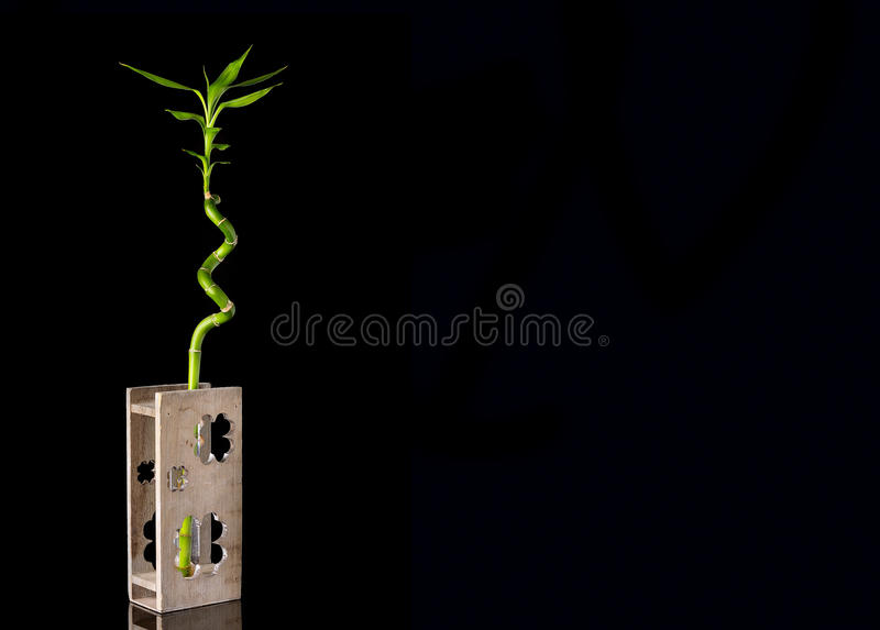 Ökologiekonzeptbild mit Bambusstamm im hölzernen Vase auf schwarzem Hintergrund lizenzfreies stockfoto
