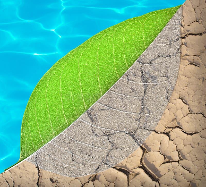 Ökologieleben und Wasserkonzept lizenzfreie stockfotografie