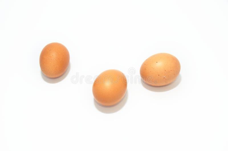 Ökologisch-braune Eier mit isolierten weißen Hühnerspeken lizenzfreie stockfotografie