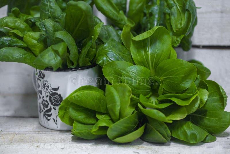 Ökologisch saubergezüchtete Grün, verschiedene Arten von Salat, Spinat und Arugula lizenzfreie stockfotografie