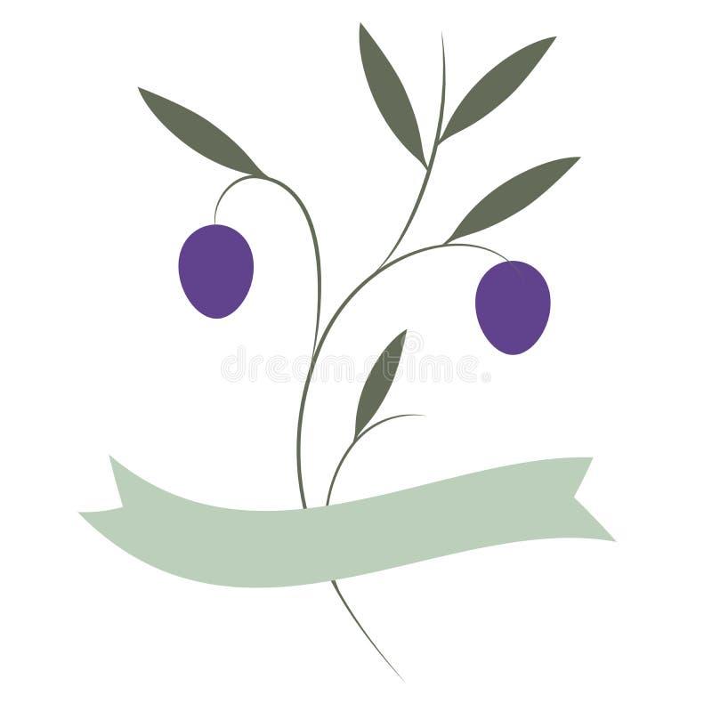 Ölzweige und purpurrote Oliven lokalisiert auf weißem Hintergrund vektor abbildung