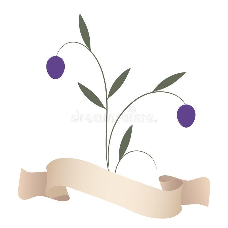 Ölzweige und purpurrote Oliven lokalisiert auf weißem Hintergrund stock abbildung