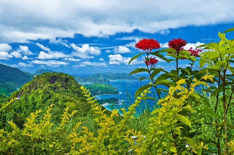 ömahe seychelles royaltyfria foton