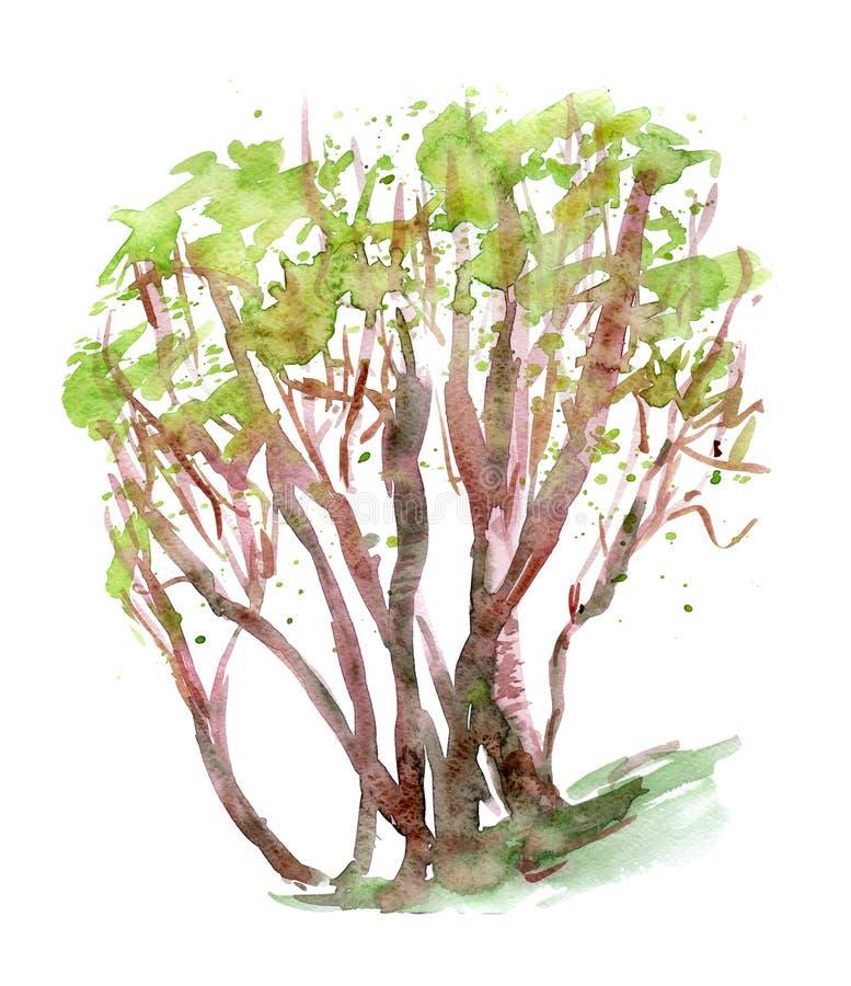 Ömda stället för skogträd skissar stock illustrationer