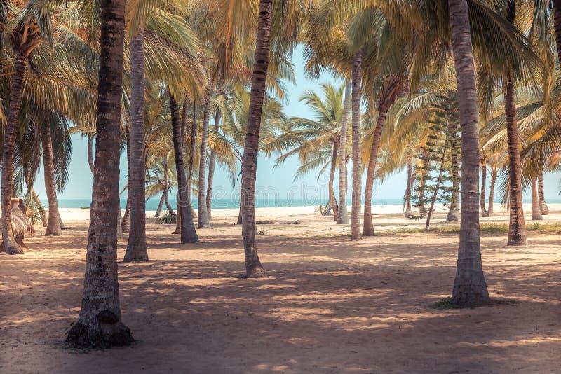 Ön för bakgrund för tappning för strandpalmträd gömma i handflatan den tropiska dungen med skuggalandskap royaltyfri foto