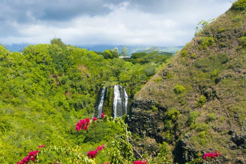 Ön faller i den djungelhawaii kawaiien Förenta staterna royaltyfria bilder