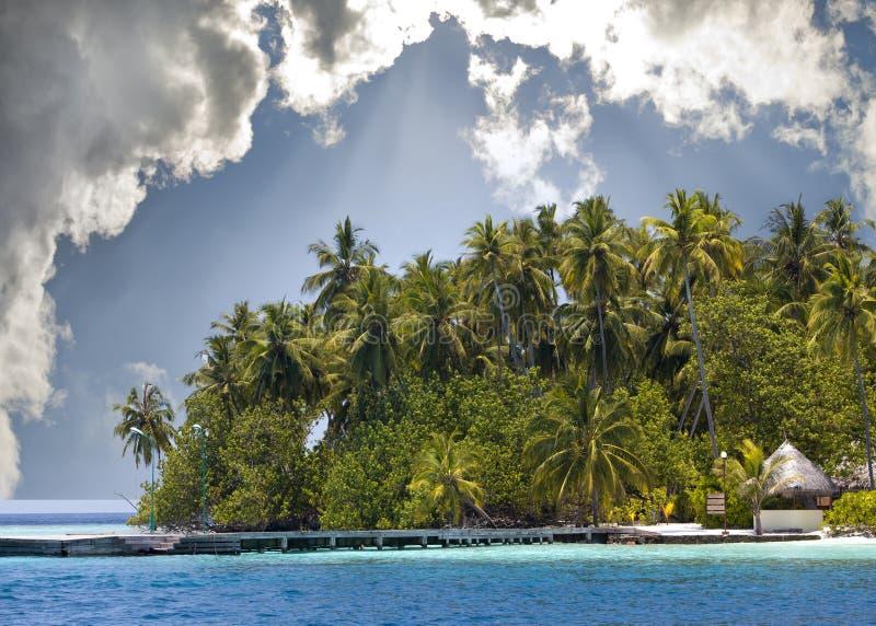 Ön med palmträd i hav arkivfoton