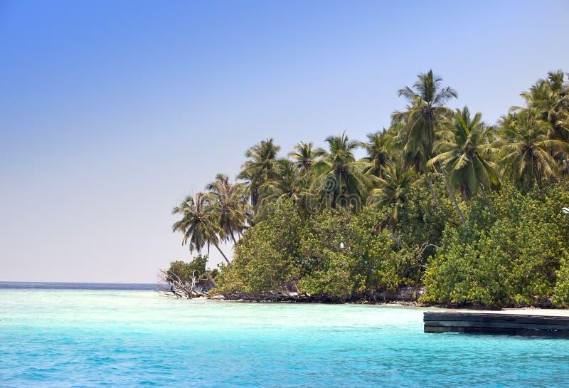 Ön med palmträd i hav arkivbild