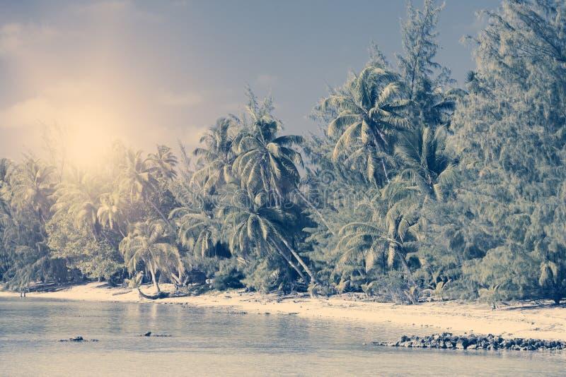 Ön med palmträd i havet, tappning royaltyfri fotografi