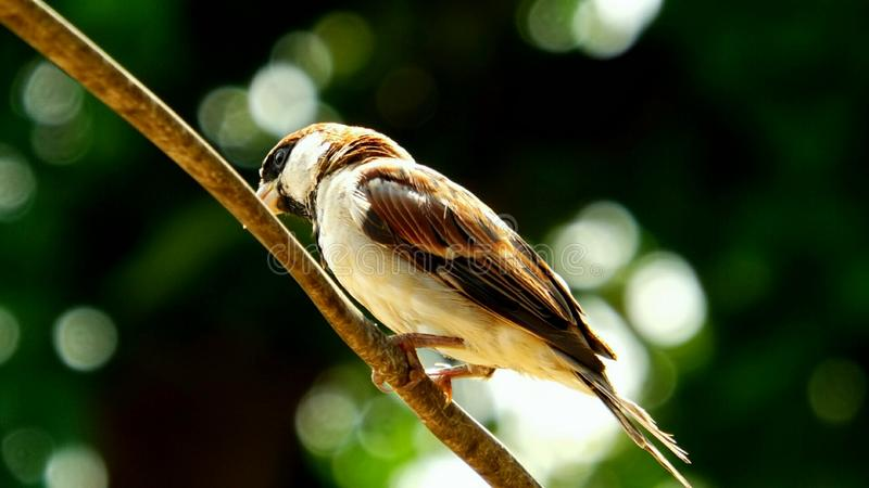Önska att flyga som en fågel royaltyfri bild