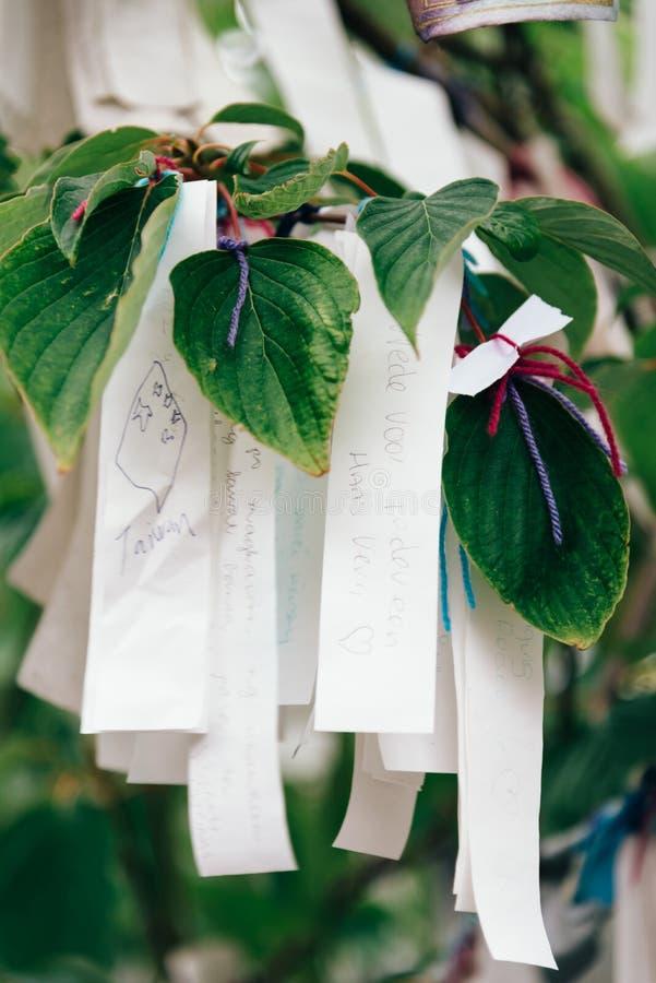 Önska trädet framme av fredslotten royaltyfria foton