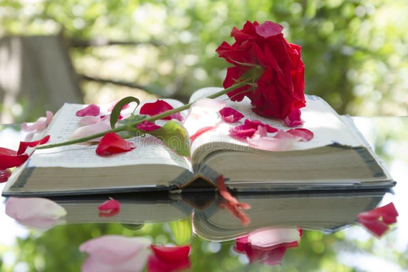 Öppen glödande bibel i natur royaltyfri foto