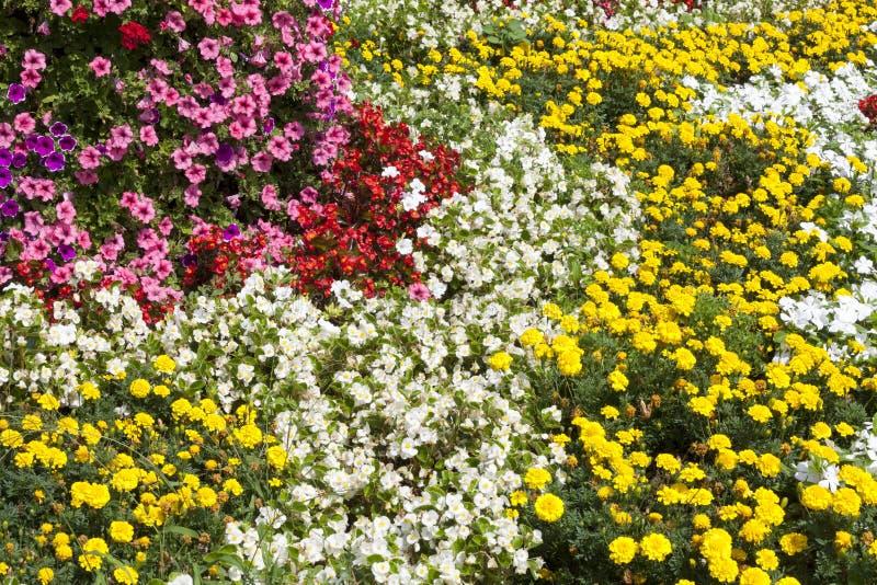 Öppna den färgrika blom- trädgården för blommor Blomningbakgrund royaltyfri bild