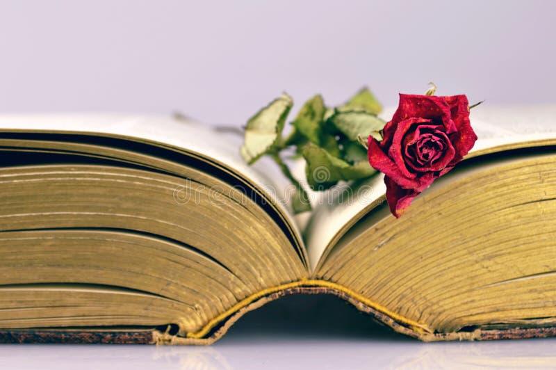 Öppna den gamla boken och torka rosa royaltyfri foto