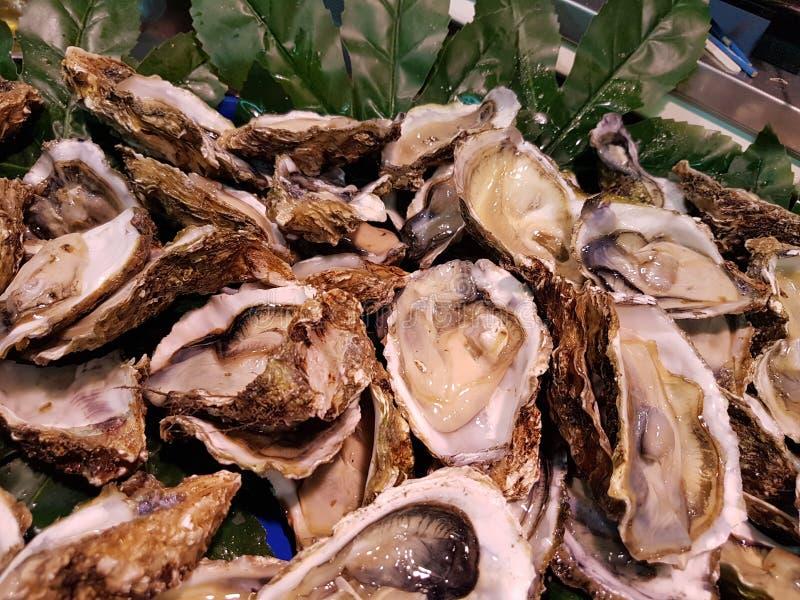 Öppna ostron som är konsumtionsfärdiga i en restaurang royaltyfri fotografi