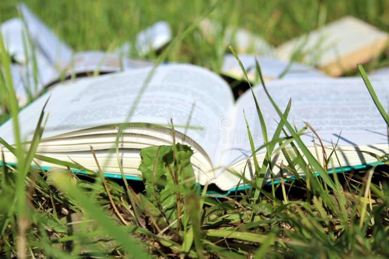 Öppnad bok på grönt gräs i trädgården royaltyfri fotografi