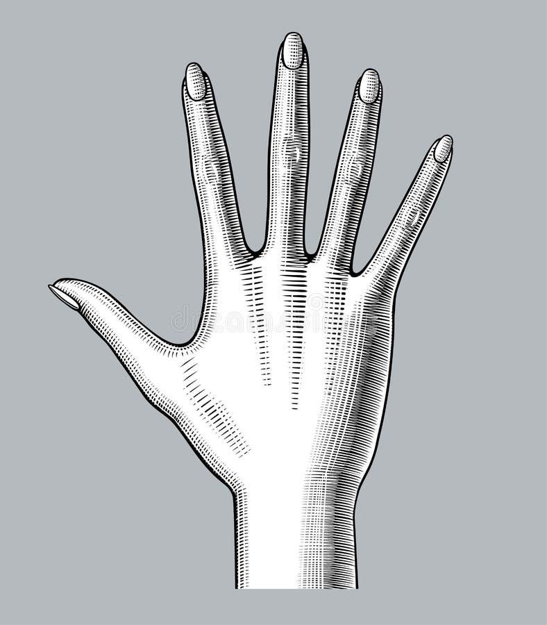 Öppnade handen för kvinna` s gömma i handflatan sneda bollen ner spridning de fem fingrarna royaltyfri illustrationer