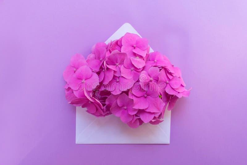 Öppnat kuvert med den rosa vanlig hortensiablomman på en försiktig lila bakgrund Orientering för vykort royaltyfri bild