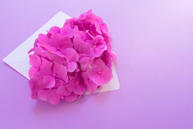 Öppnat kuvert med den rosa vanlig hortensiablomman på en försiktig lila bakgrund Orientering för vykort arkivfoto