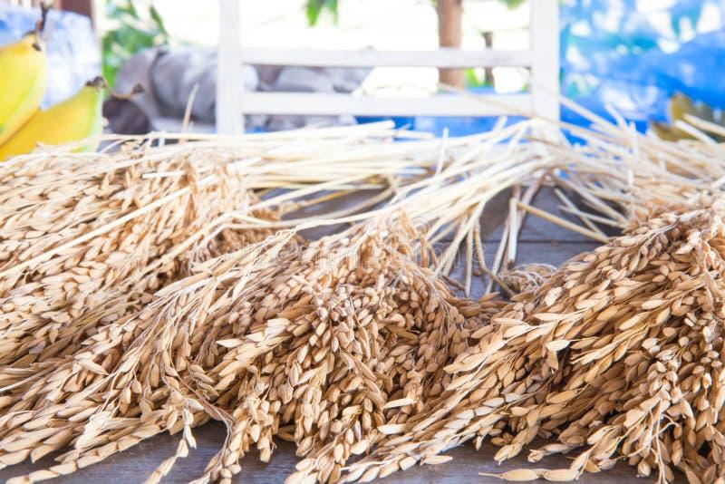 Öra av ris arkivbild