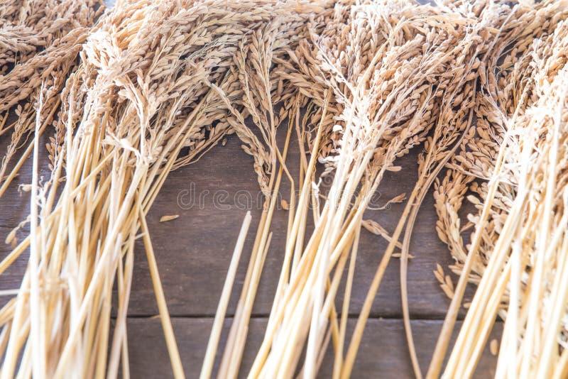 Öra av ris royaltyfri bild