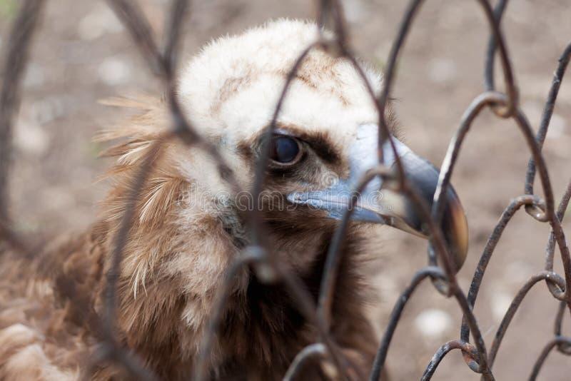 Örn på zooen royaltyfria foton