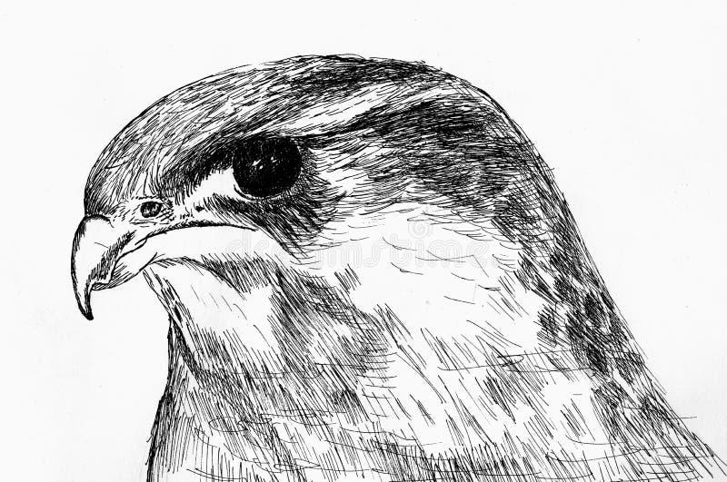 örn presenterat huvud vektor illustrationer