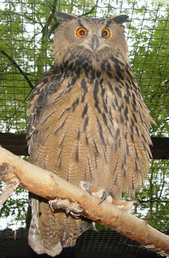 Download örnowl fotografering för bildbyråer. Bild av skog, trän - 28939