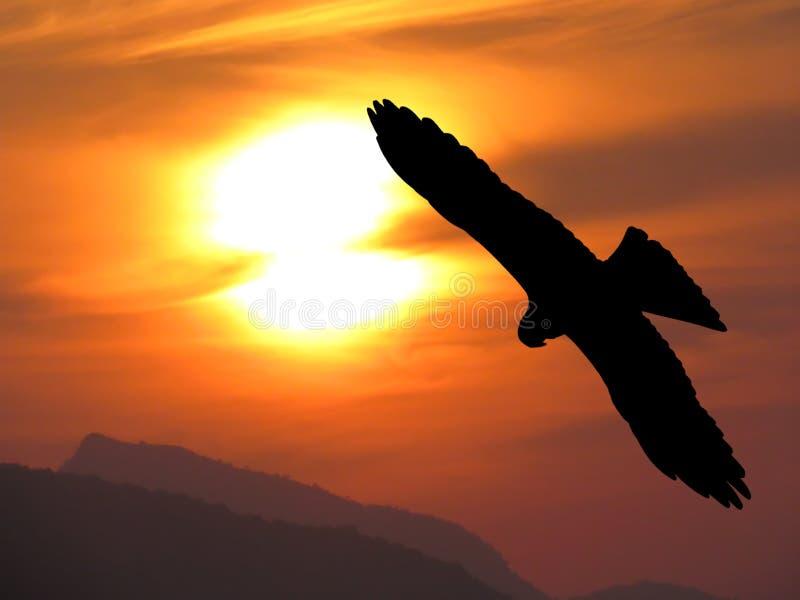 Örnsilhouette över mest härlig solnedgångplats arkivbild