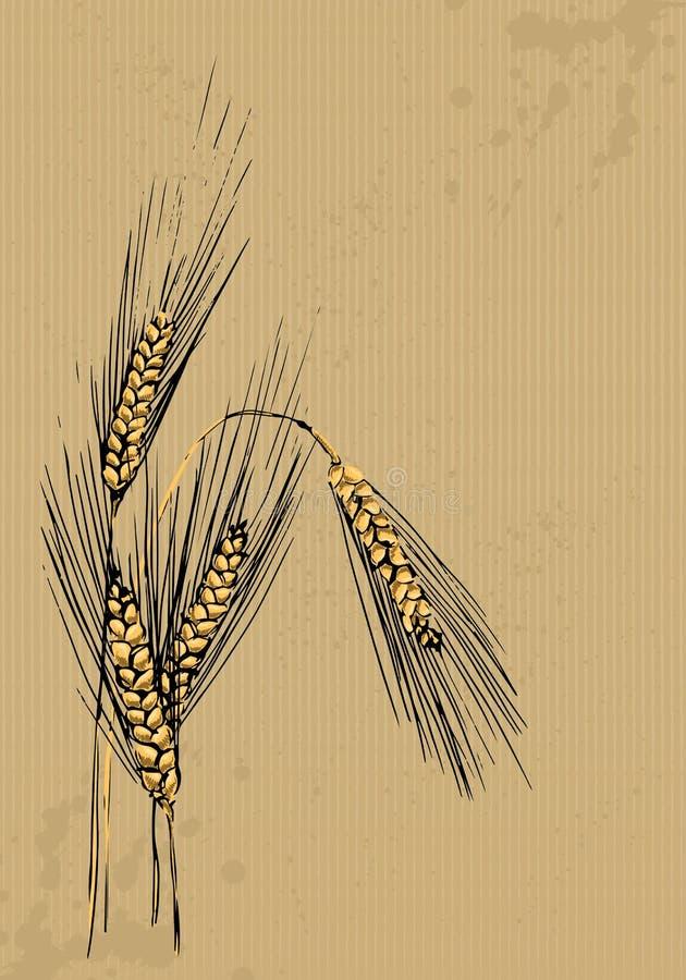 Öron av korn stock illustrationer