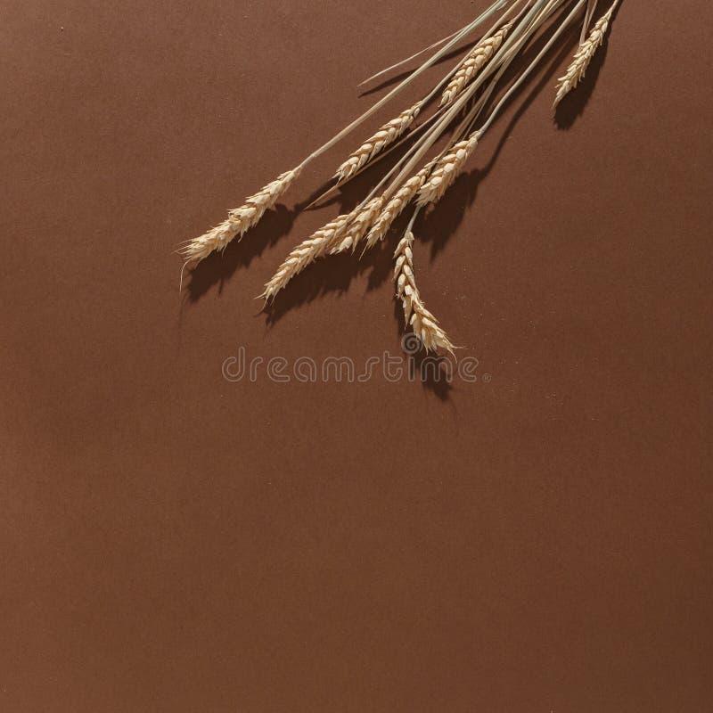 Öron av vete på en brun bakgrund Top beskådar fotografering för bildbyråer
