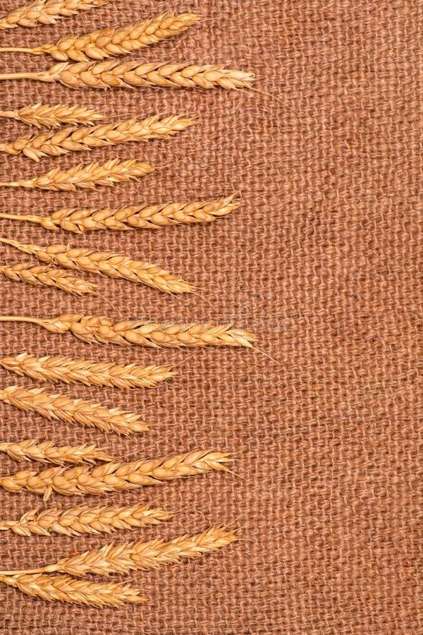 Öron av vetelögnen på en juteservett Begreppet av skörden och välfärd v?gg f?r textur f?r bakgrundstegelsten gammal kopiera avst? arkivfoton