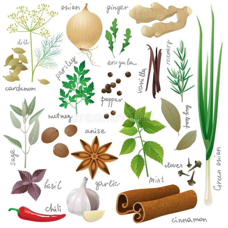 örtar för fjärdcardamonvitlök blad vanilj för kryddor för pepparrosmarinar salt stock illustrationer