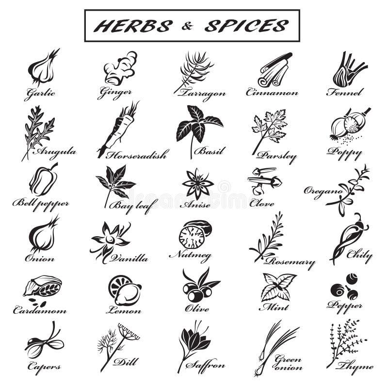 örtar för fjärdcardamonvitlök blad vanilj för kryddor för pepparrosmarinar salt vektor illustrationer