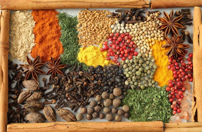 örtar för fjärdcardamonvitlök blad vanilj för kryddor för pepparrosmarinar salt arkivfoto