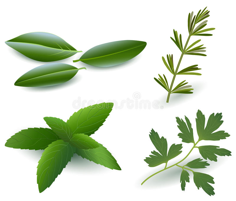 Örtar (lagrar, rosmarinar, Mint, Parsley) stock illustrationer