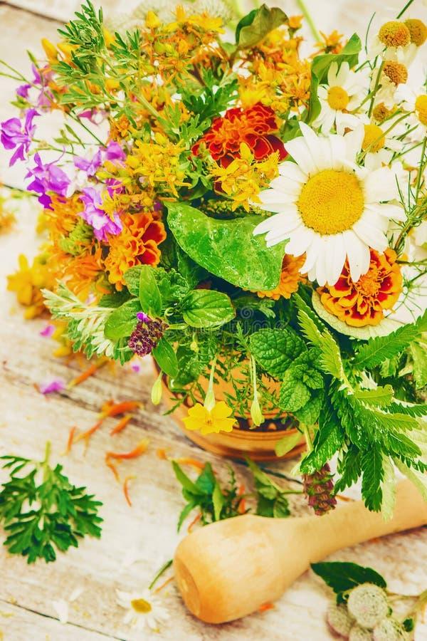 örtar medicinal växter royaltyfri foto