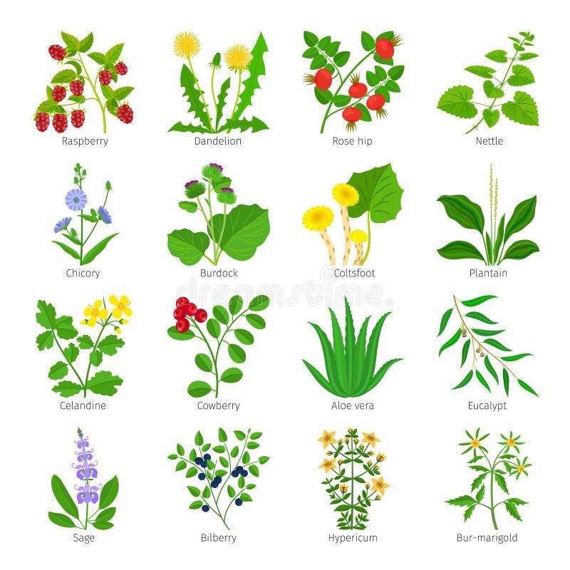 Örter och blommor för Aromatherapy medicinska stock illustrationer