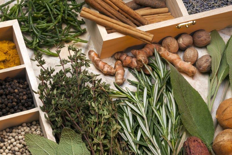 Örter och kryddor royaltyfri bild