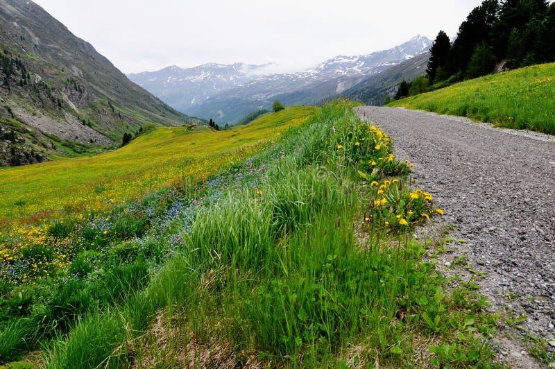 Österreichische Landschaft mit bunter Blumenwiese lizenzfreie stockfotos