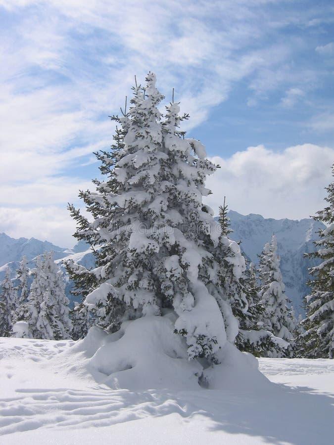 Österrike liggandevinter arkivbild