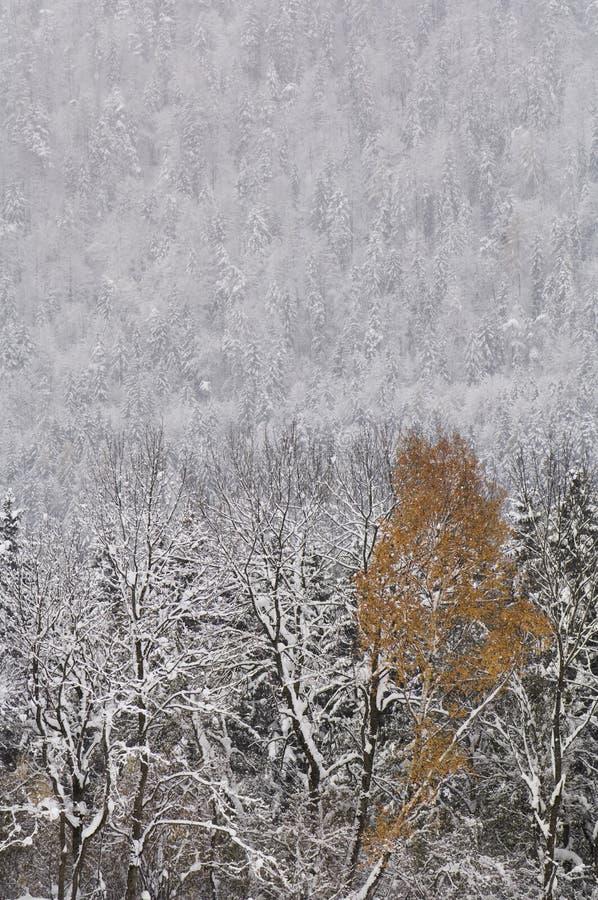 Österrike Salzburger land, vinterlandskap arkivbilder