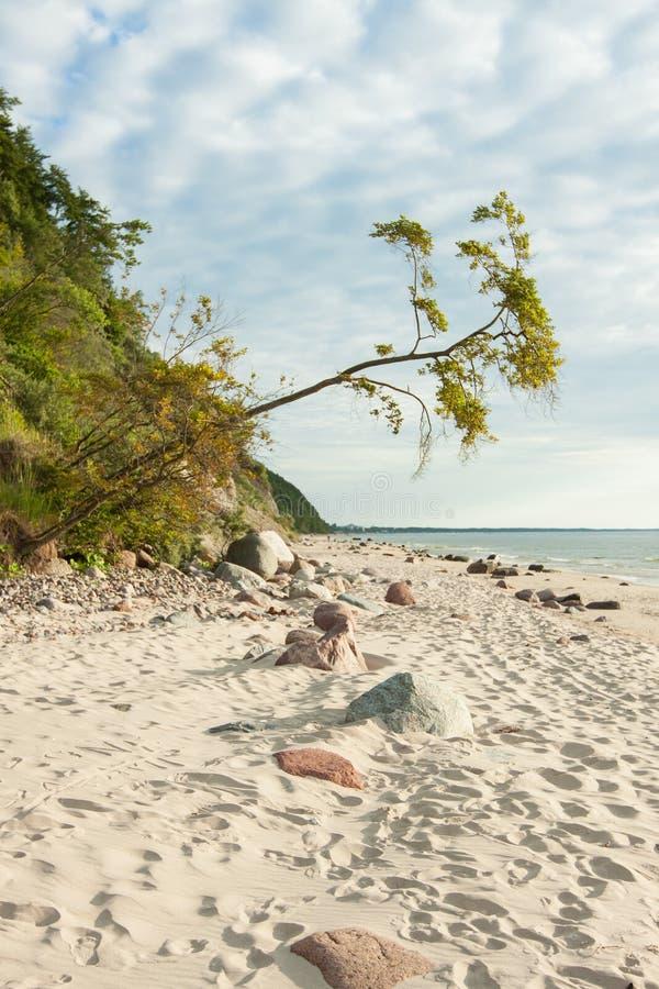 Östersjön Polen Wolin arkivfoton