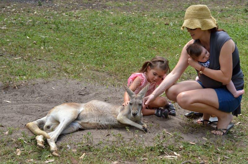 Östliche graue Kängurufrau lizenzfreie stockbilder