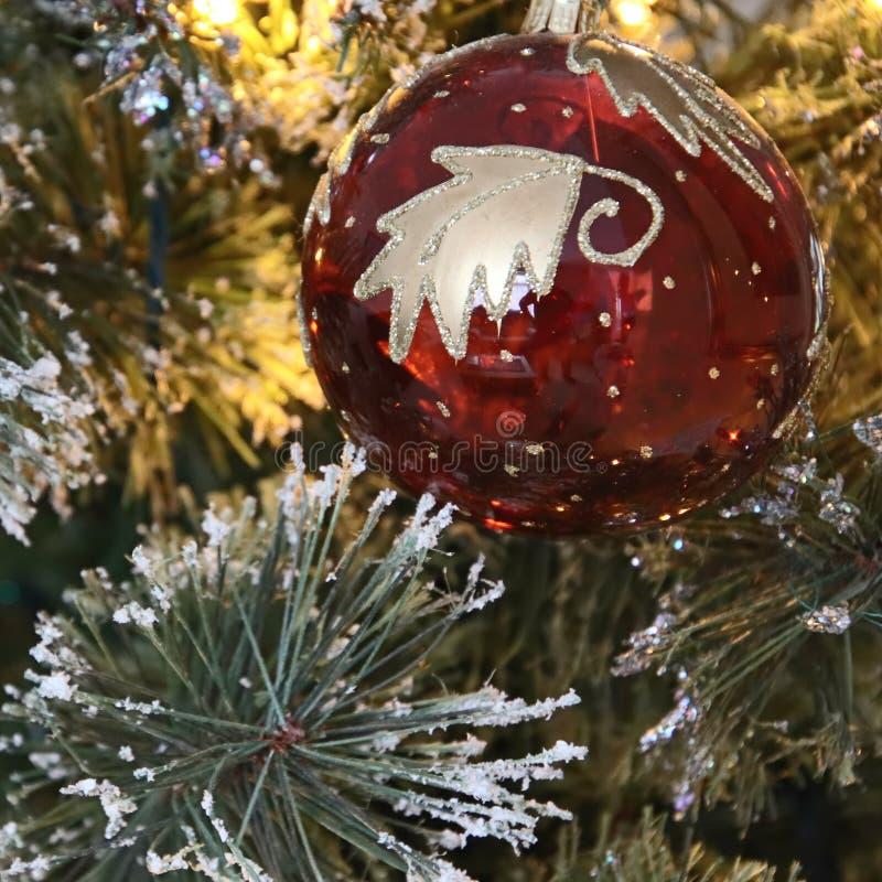 ÖSTLIG GRINSTEAD, VÄSTRA SUSSEX/UK - DECEMBER 20: Julgran De royaltyfri fotografi