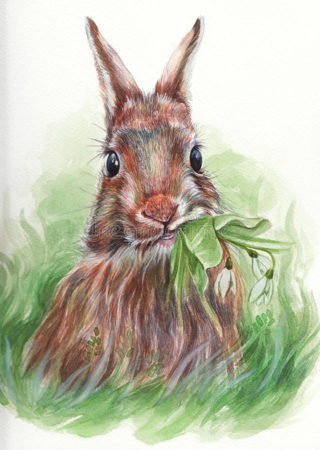 Östlig kanin som äter snödroppar vektor illustrationer