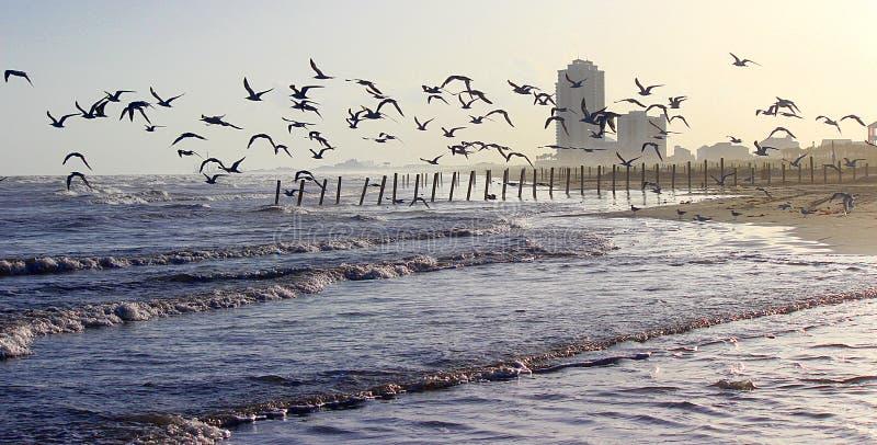Östlig strand (färg) arkivbild