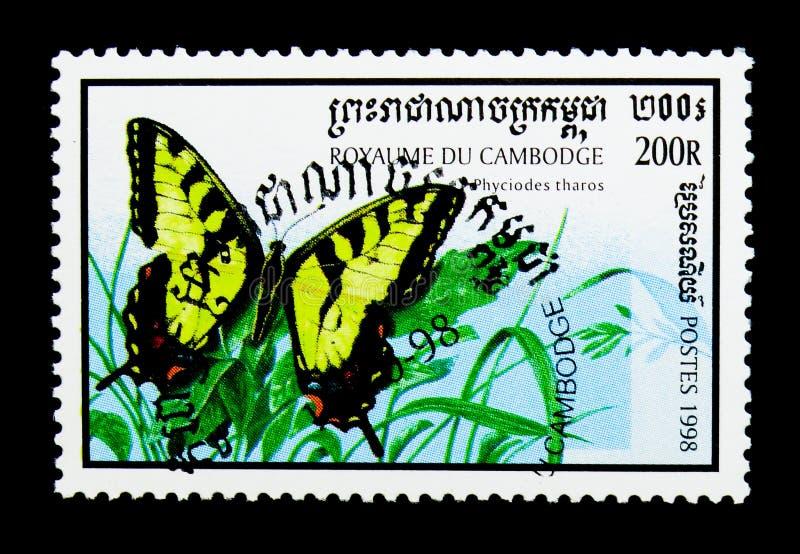 Östlig Tiger Swallowtail Papilio glaucus, fjärilsserie, circa 1998 arkivbilder