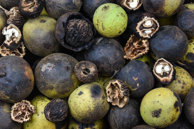 Östliga svarta valnötter i en stor hög Denna bild visar olika etapper av mognad, från grönt skal till muttern royaltyfri fotografi