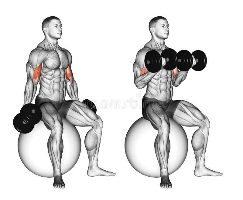 öva Bicepskrullning som placeras på stabilitetsboll royaltyfri illustrationer
